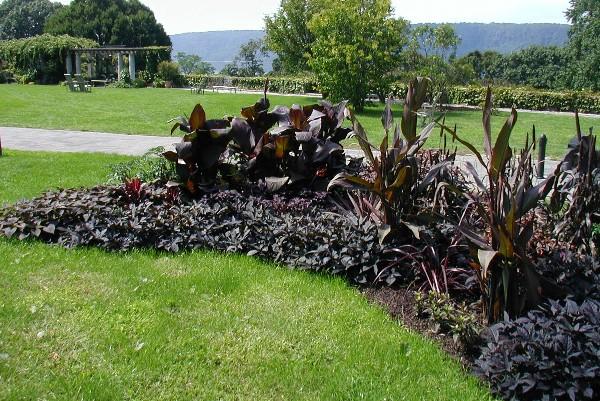 Black Garden Bed Black garden, Perennial plants, Plants