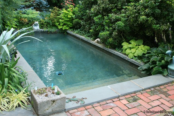 What is a plunge pool design joy studio design gallery for Plunge pool design