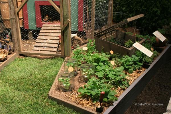 Bellewood gardens diary for Small kitchen garden