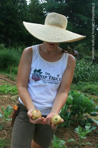 Visit to turnip truck gardens