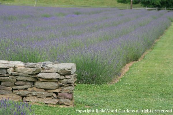 BelleWood-Gardens - Diary